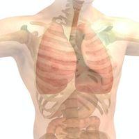 """Lo que sabemos sobre el """"intersticio"""", el supuesto nuevo órgano humano que se acaba de descubrir"""