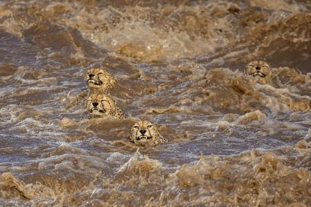 C Buddhilini De Soyza Wildlife Photographer Of The