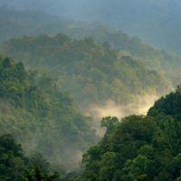 ¿Debemos agradecer al cambio climático que haya más árboles en la Tierra?