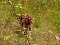 El Parque Nacional más antiguo de Alemania: linces, lobos y osos