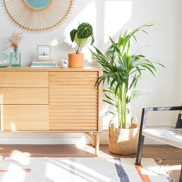 Estas siete plantas son las favoritas de los millennials para decorar su casa en 2021