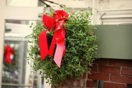 Aunque sea pequeña: cinco plantas para llenar tu casa de Navidad