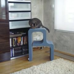 Foto 3 de 5 de la galería catworks-un-rascador-para-el-gato-con-la-inicial-de-su-nombre en Decoesfera