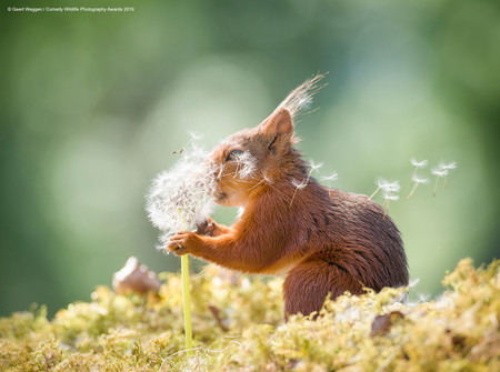 Geert Weggen Squirrel Wishes 00003677