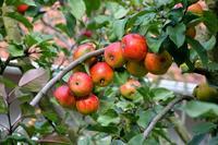 Cómo saber si una fruta está madura sin estropearla: un láser podría ser el futuro
