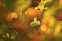 El «flou» en fotografía: qué es y cómo utilizarlo