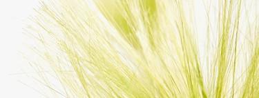 En Zara Home también tienen la mejor selección de plantas artificiales para que tus jarrones siempre se vean perfectos