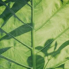 Foto 2 de 14 de la galería fondos-de-naturaleza-1 en Xataka Android