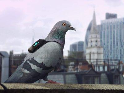 Londres es la primera ciudad en tener un equipo de palomas para medir la calidad del aire