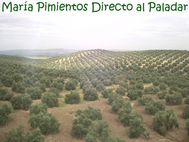 No todos los aceites de oliva son iguales