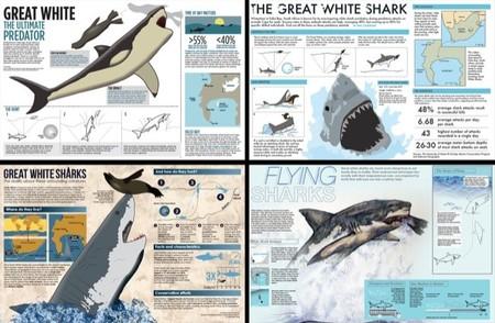 La fascinación de los niños por los tiburones y las detalladas infografías para aprender