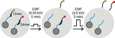 Nanopartículas controladas remotamente liberan medicamentos directamente en los tumores
