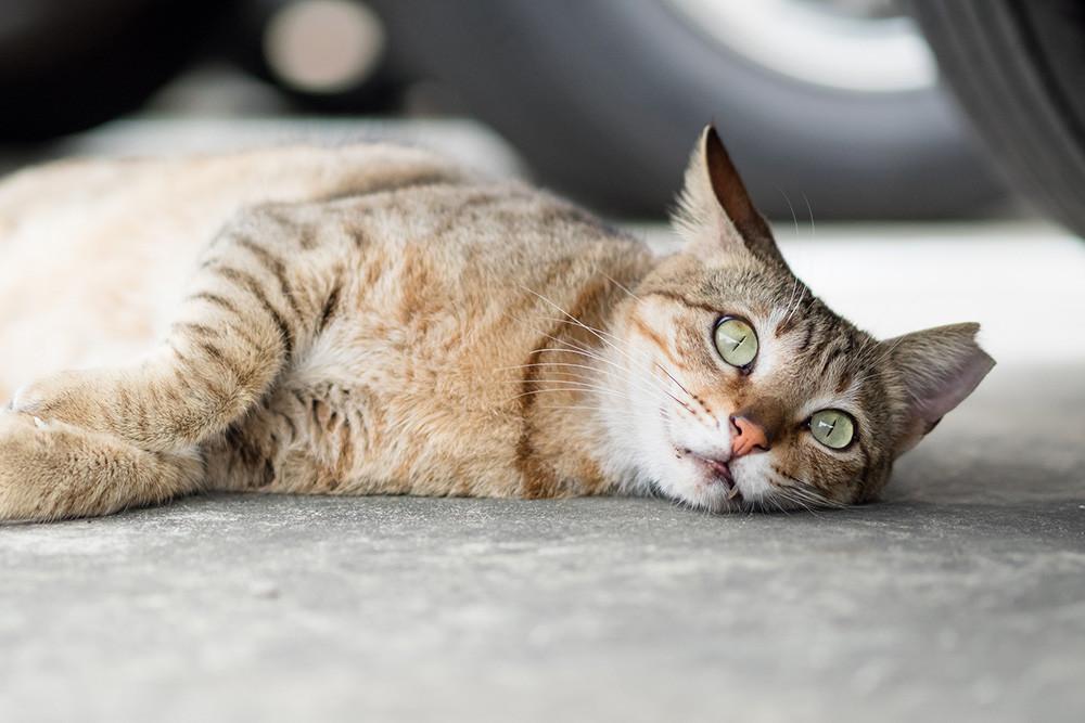 Como Fotografiar Mascotas I Gatos 3