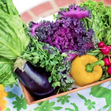 Aprovecha el tiempo en cuarentena: te enseñamos a sembrar cinco frutas y verduras desde casa
