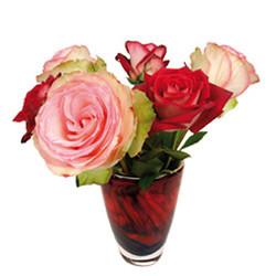 rosas adhesivas vincon