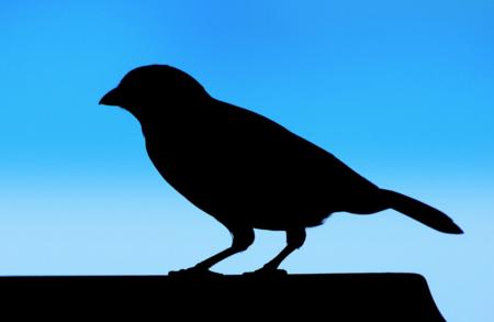 Baneos temporales y autofiltrado de menciones: las nuevas medidas de Twitter para frenar los abusos en su red