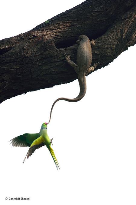 Ganesh H Shankar Wildlife Photographer Of The Year Birds