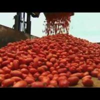 ¿Cómo se prepara la Tomatina de Buñol? La fiesta más roja del mundo a ras de cielo