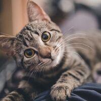 MeowTalk: la app que promete traducir maullidos de gato creada por un  ex-ingeniero de Alexa