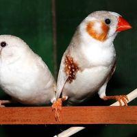 Algunas aves envejecen más rápidamente por culpa del ruido del tráfico