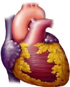 Problemas cardiovasculares vinculados a la contaminación