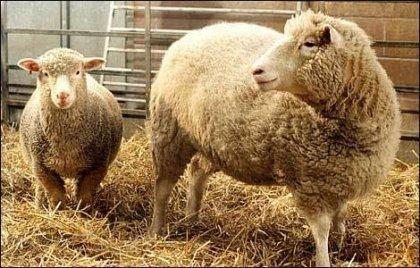 La UE dice NO a la carne de animales clonados
