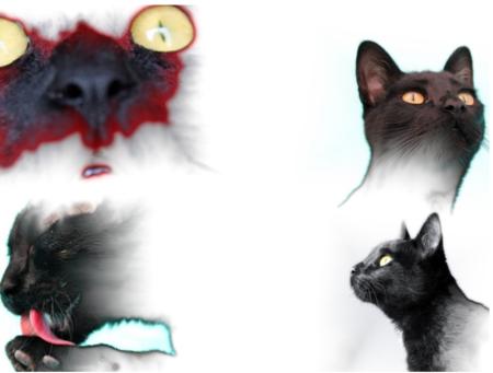Siete webs y aplicaciones para crear collages de tus fotos de Facebook