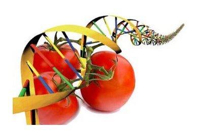 Nutrigenomia: la ciencia que previene enfermedades mediante los alimentos