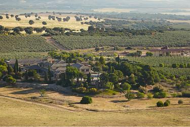 Visita a la finca olivarera de Casas de Hualdo (I). Un buen aceite nace en la tierra