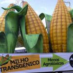 Más de cien premios Nobel piden a Greenpeace que cambie su postura sobre los transgénicos