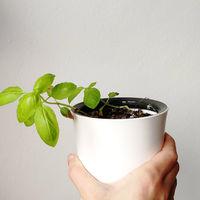 Esta maceta eléctrica riega las plantas por ti de forma automática: probamos Botanium durante tres meses