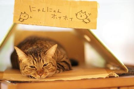 800px Kantaro Taking A Rest In A Box (5941709022)
