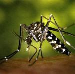 El calentamiento global favorece la expansión de insectos en España