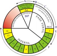 control del ciclo menstrual para no embarazarse