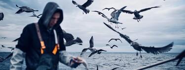 Bajo el cráneo de los pájaros listos: cuántas veces puede evolucionar la inteligencia de forma independiente
