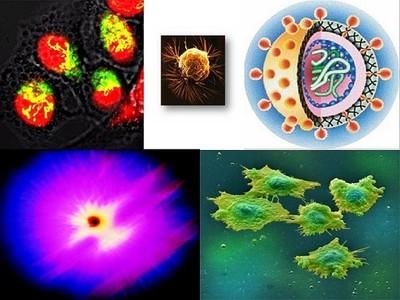 Los súperpoderes de las células cancerosas