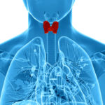 Hipotiroidismo: Cuando tu metabolismo se pone en huelga