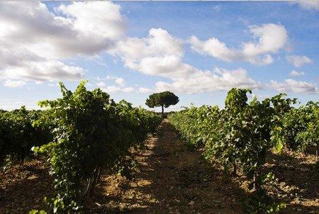 Experiencia Ribera : Vamos a despertar nuestros sentidos en Ribera del Duero