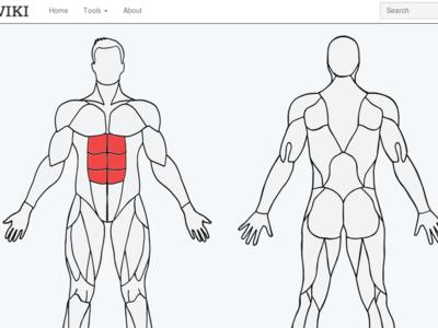 MuscleWiki, la web donde encontrarás diferentes ejercicios por grupo muscular