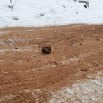 Rusia ha descubierto una carretera repleta de huesos humanos en Siberia. Otra más