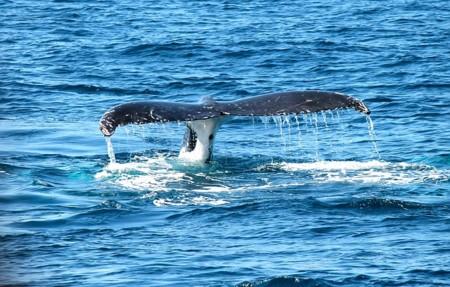 Whale 367233 640