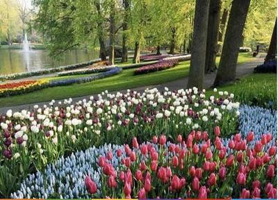 La exposición de tulipanes más grande del mundo