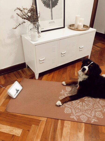 Probamos las skills de Amazon para convertir a Alexa en un profesor de yoga o entrenador personal