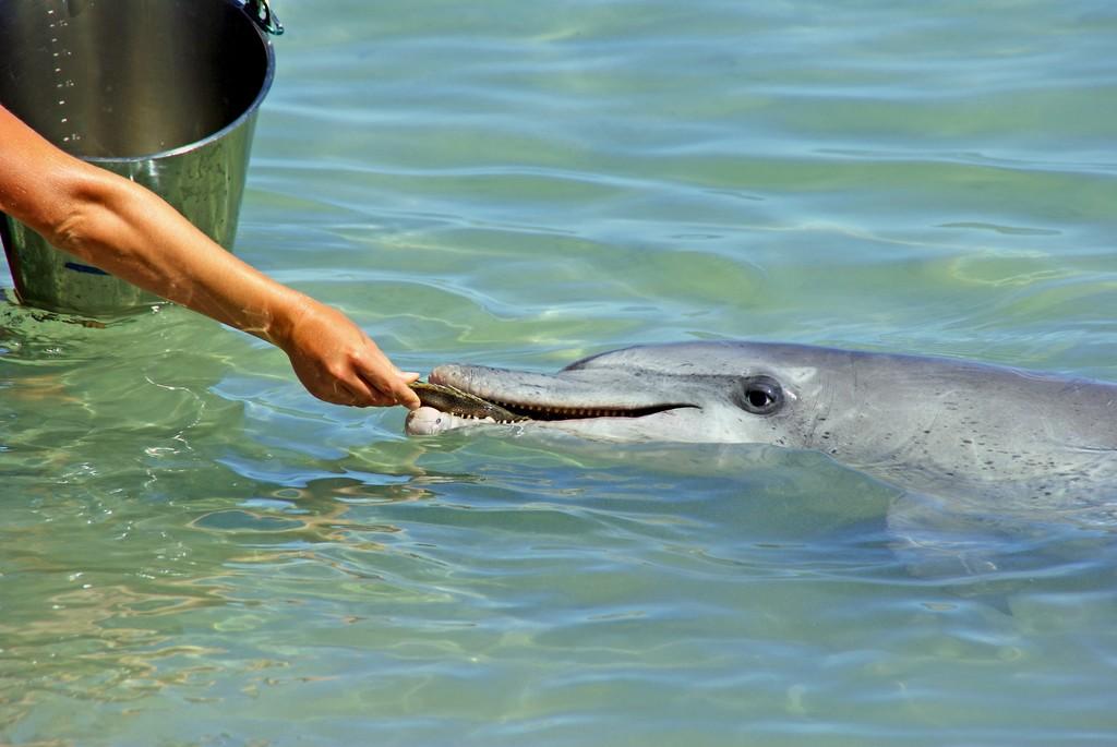 Hay carne de delfín en latas