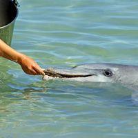 """Hay carne de delfín en latas """"de atún"""" en México, según este estudio de la UNAM"""