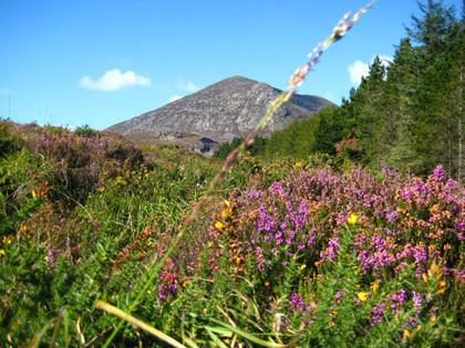 Blogger Trip: Escapada desde Belfast a las montañas de Mourne