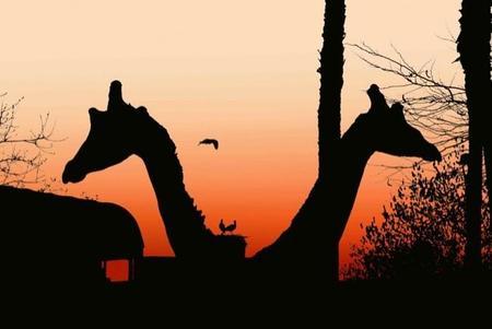 atardecer_en_el_zoo_baja_6302014.jpg