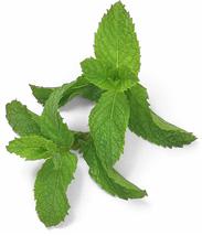Las dietas hipocalóricas disminuyen el metabolismo y el té lo aumenta