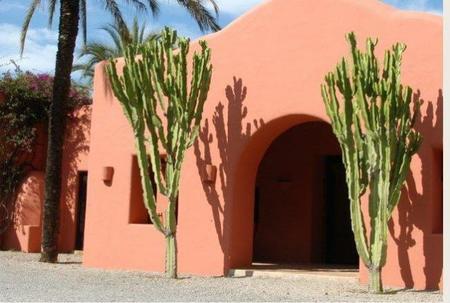 cala_dhort_cactus