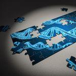 Los cromosomas ofrecen una pista de por qué uno sexo vive más que el otro en diferentes especies